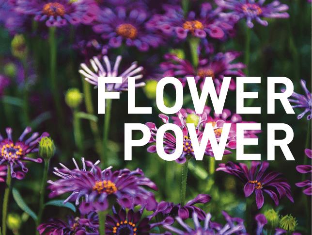 FLOWERPOWER – Gewinnspiel